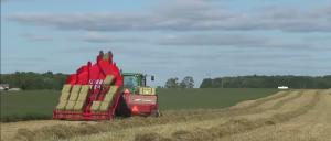 Bale accumulator collecting and forming hay bales