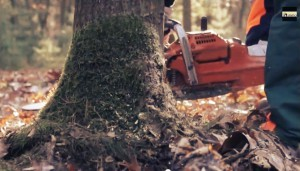 gebrauchte Kettensägen Forsttechnik