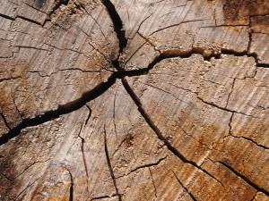 Holzwerkstoff Bearbeitung